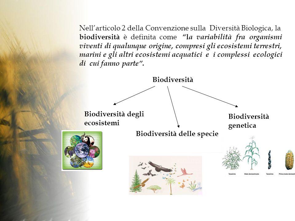 Nell'articolo 2 della Convenzione sulla Diversità Biologica, la biodiversità è definita come la variabilità fra organismi viventi di qualunque origine, compresi gli ecosistemi terrestri, marini e gli altri ecosistemi acquatici e i complessi ecologici di cui fanno parte .