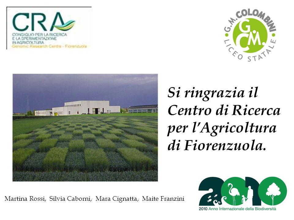 Si ringrazia il Centro di Ricerca per l'Agricoltura di Fiorenzuola.