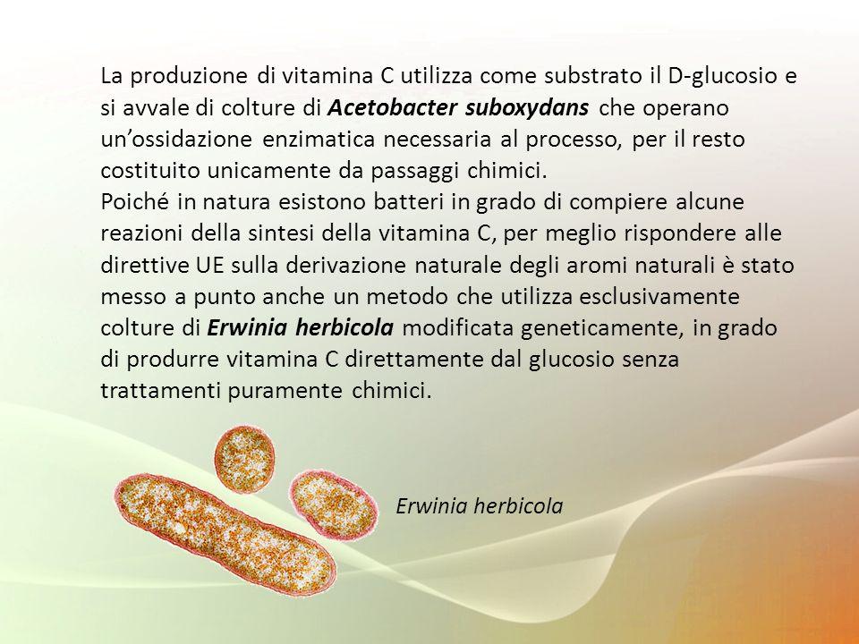 La produzione di vitamina C utilizza come substrato il D-glucosio e si avvale di colture di Acetobacter suboxydans che operano un'ossidazione enzimatica necessaria al processo, per il resto costituito unicamente da passaggi chimici.