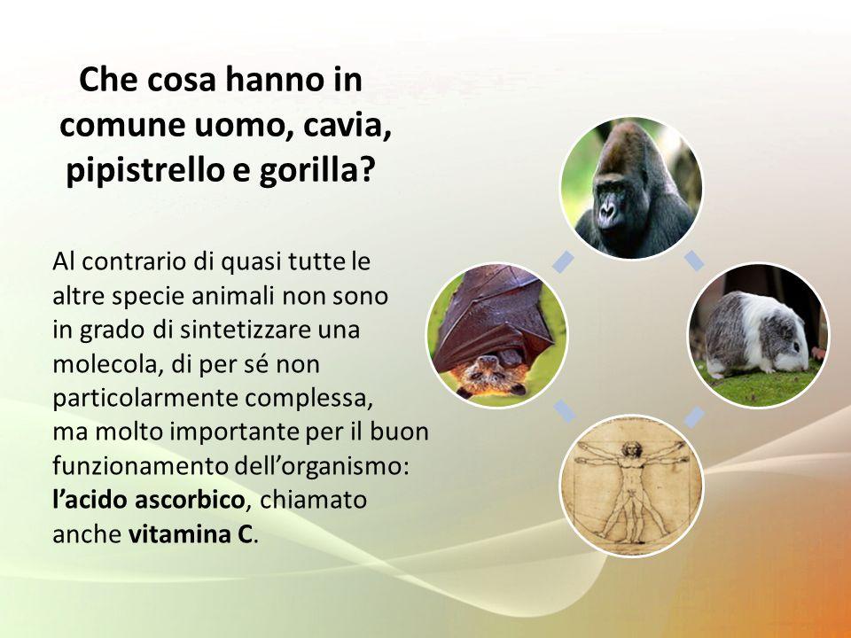comune uomo, cavia, pipistrello e gorilla