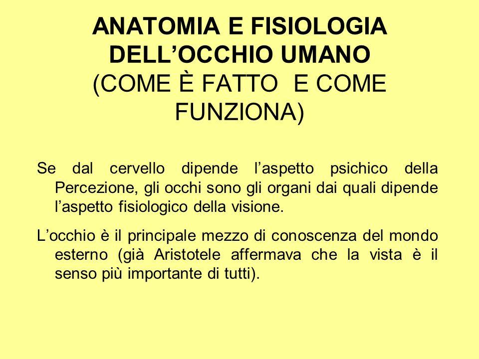 ANATOMIA E FISIOLOGIA DELL'OCCHIO UMANO (COME È FATTO E COME FUNZIONA)