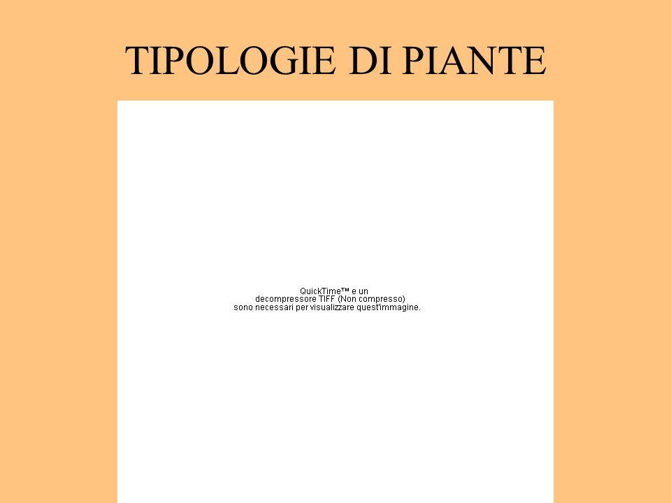TIPOLOGIE DI PIANTE