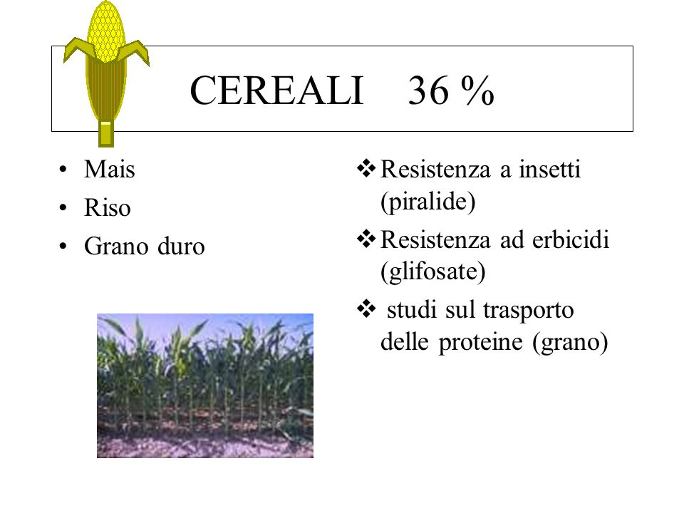 CEREALI 36 % Mais Riso Grano duro Resistenza a insetti (piralide)
