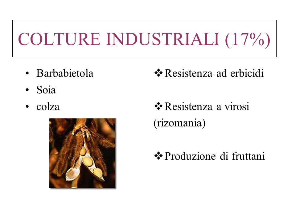 COLTURE INDUSTRIALI (17%)