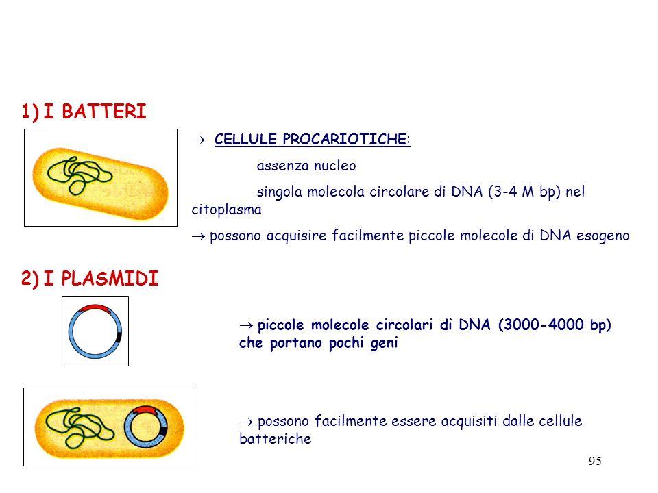 1) I BATTERI 2) I PLASMIDI CELLULE PROCARIOTICHE: assenza nucleo