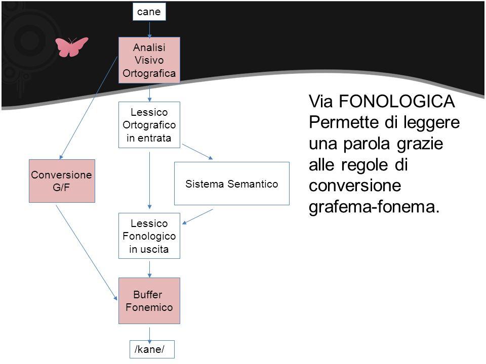 Sistema Semantico Lessico. Ortografico. in entrata. Conversione. G/F. cane. /kane/ Fonologico.