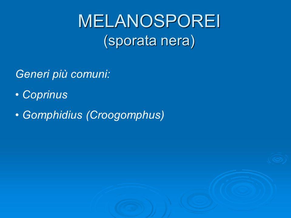 MELANOSPOREI (sporata nera)