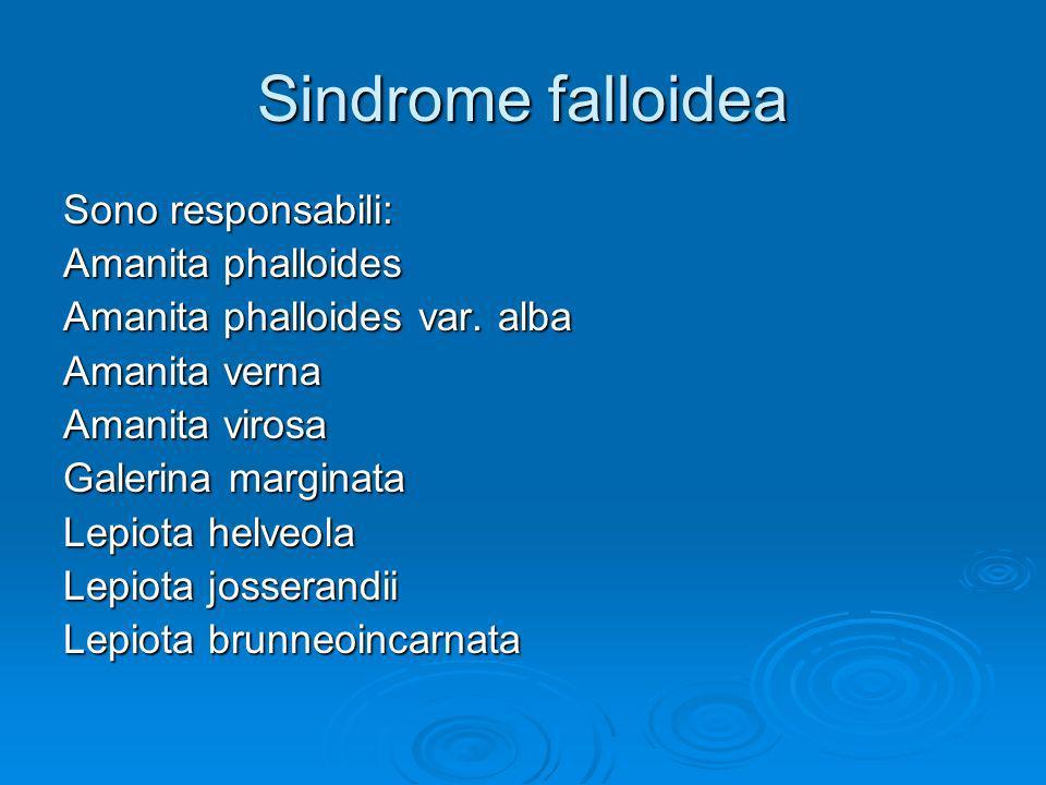 Sindrome falloidea Sono responsabili: Amanita phalloides