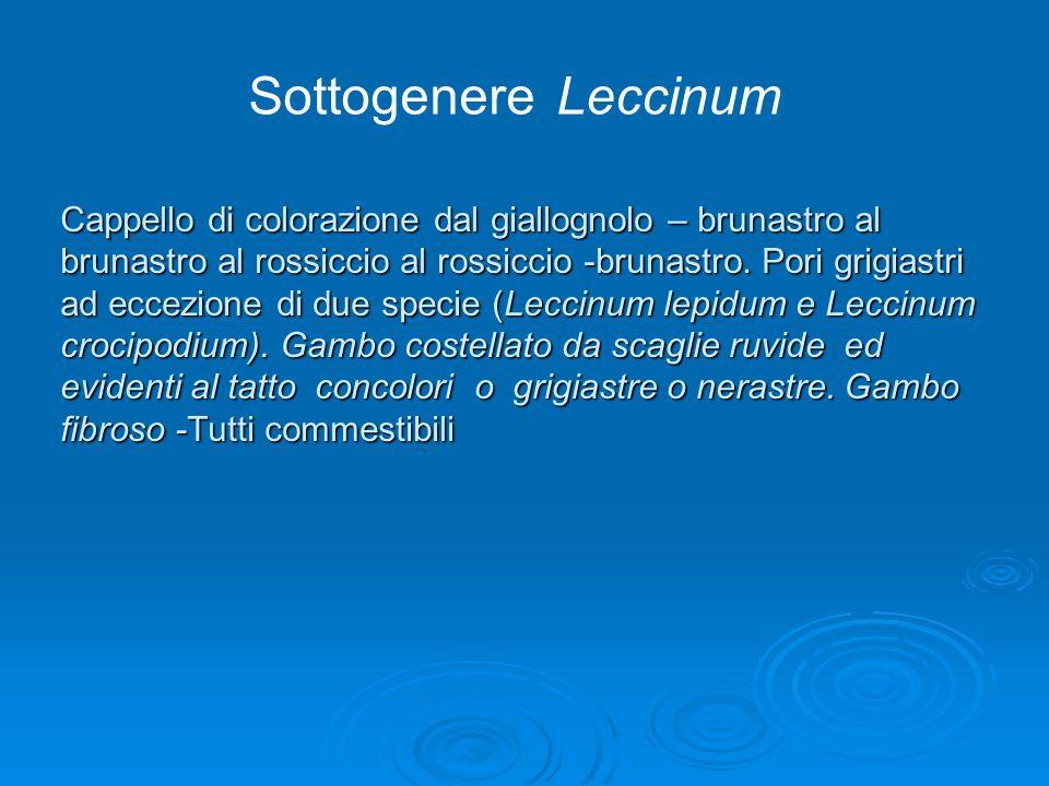 Sottogenere Leccinum