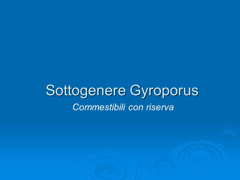 Sottogenere Gyroporus