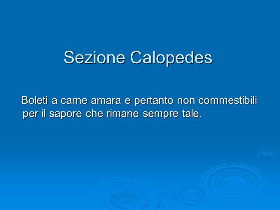 Sezione Calopedes Boleti a carne amara e pertanto non commestibili per il sapore che rimane sempre tale.
