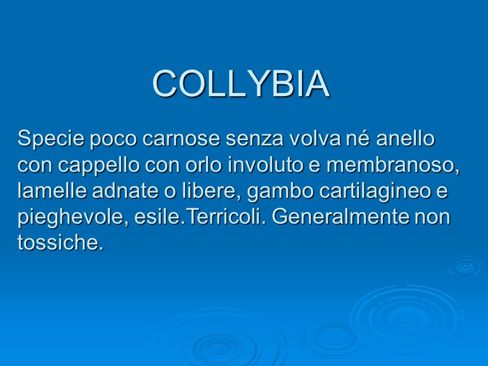COLLYBIA