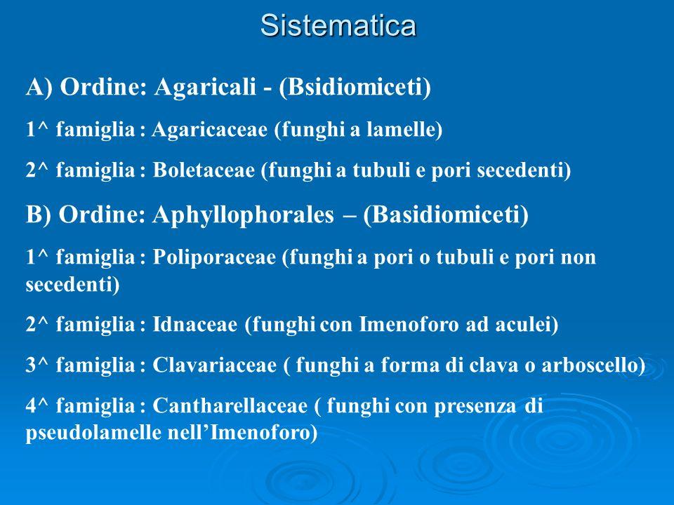 Sistematica A) Ordine: Agaricali - (Bsidiomiceti)