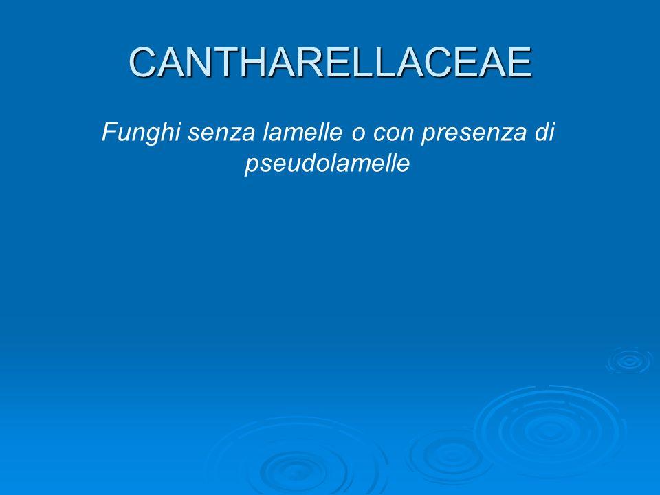 Funghi senza lamelle o con presenza di pseudolamelle