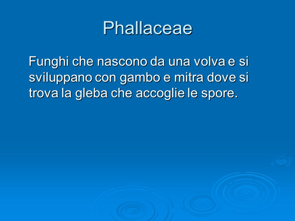 Phallaceae Funghi che nascono da una volva e si sviluppano con gambo e mitra dove si trova la gleba che accoglie le spore.