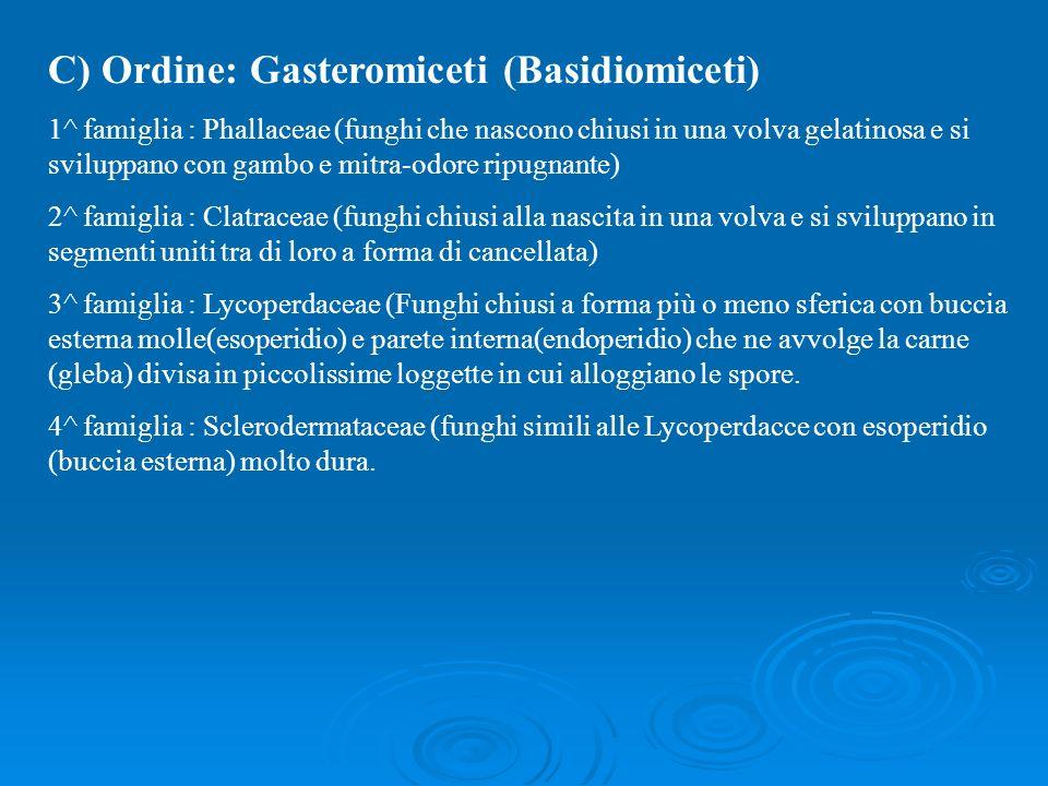 C) Ordine: Gasteromiceti (Basidiomiceti)