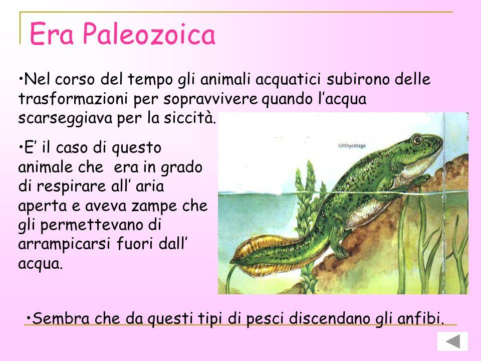 Era Paleozoica Nel corso del tempo gli animali acquatici subirono delle trasformazioni per sopravvivere quando l'acqua scarseggiava per la siccità.
