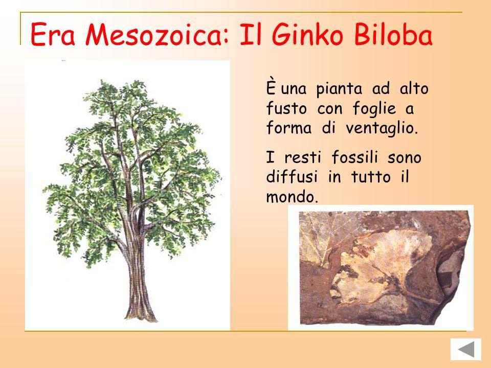 Era Mesozoica: Il Ginko Biloba
