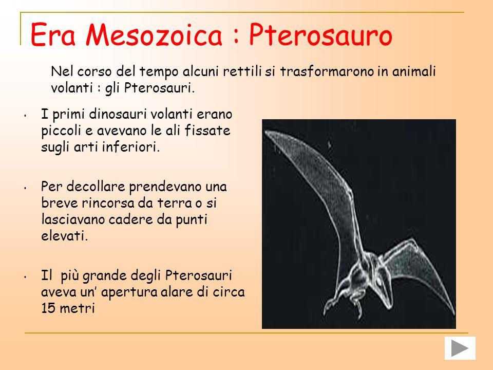 Era Mesozoica : Pterosauro
