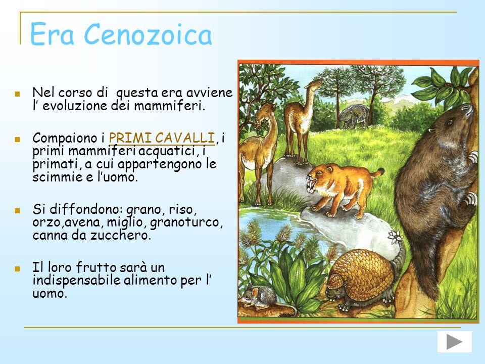 Era Cenozoica Nel corso di questa era avviene l' evoluzione dei mammiferi.