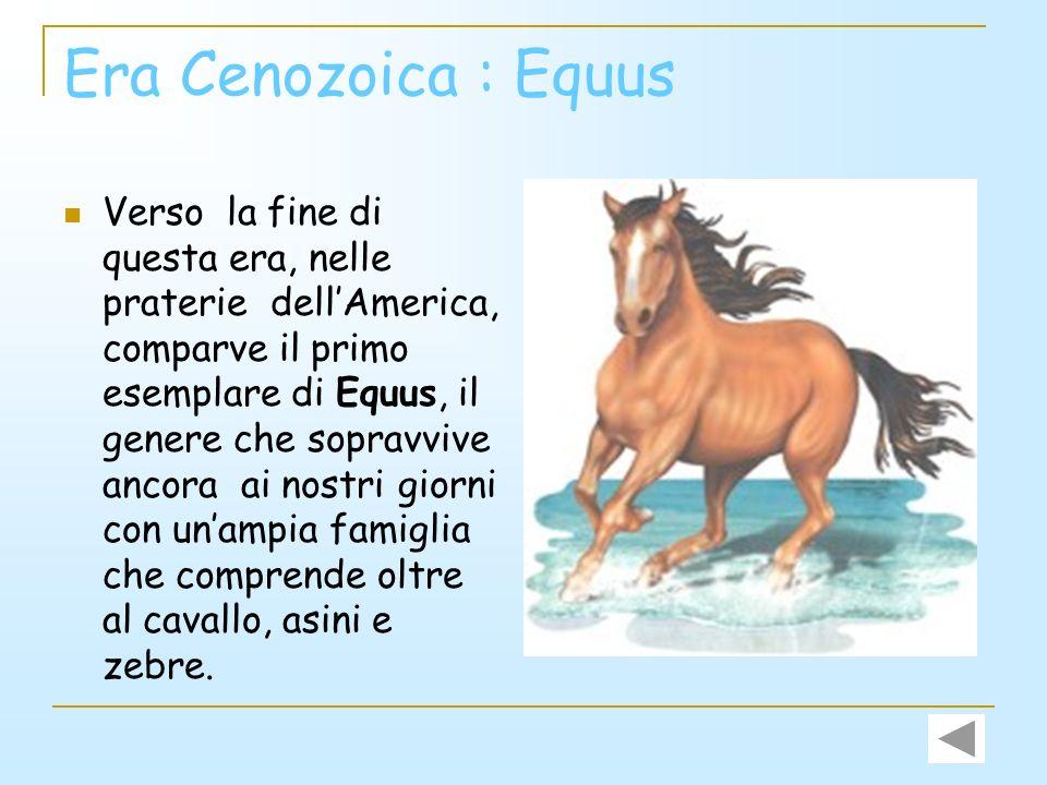 Era Cenozoica : Equus