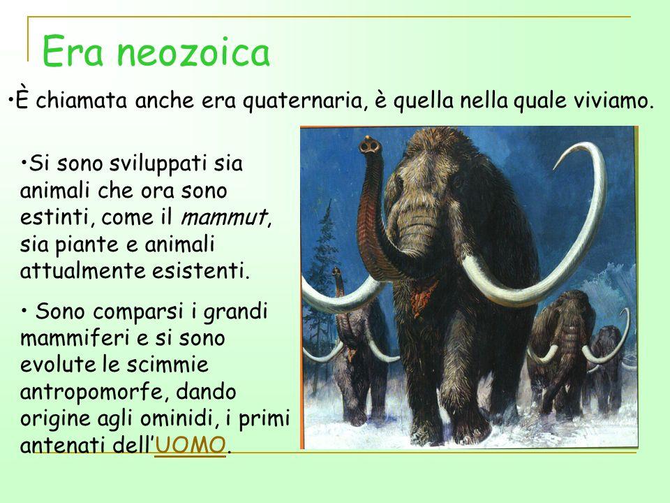 Era neozoica È chiamata anche era quaternaria, è quella nella quale viviamo.