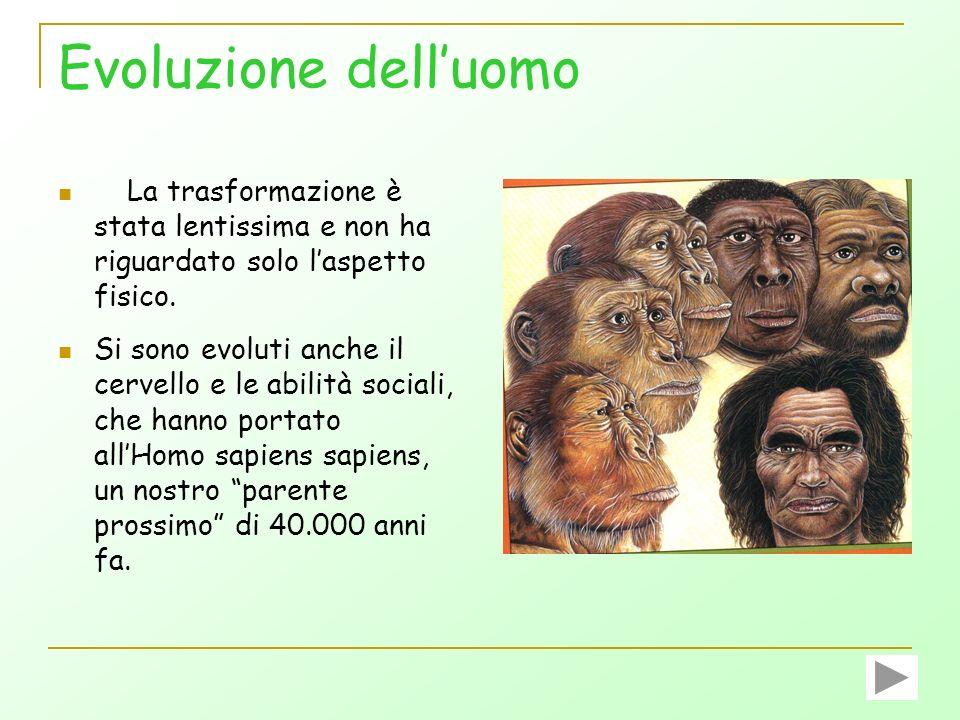 Evoluzione dell'uomo La trasformazione è stata lentissima e non ha riguardato solo l'aspetto fisico.