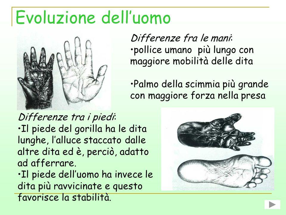Evoluzione dell'uomo Differenze fra le mani: