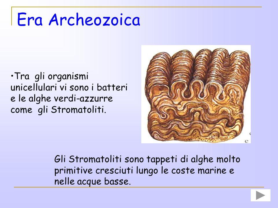 Era Archeozoica Tra gli organismi unicellulari vi sono i batteri e le alghe verdi-azzurre come gli Stromatoliti.