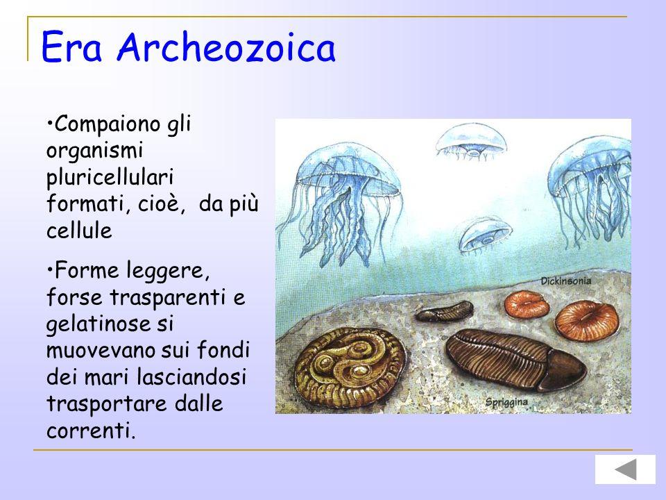 Era Archeozoica Compaiono gli organismi pluricellulari formati, cioè, da più cellule.