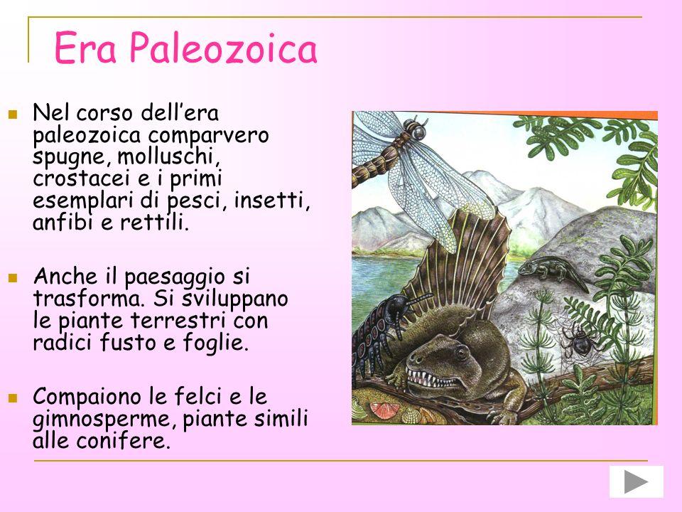 Era Paleozoica Nel corso dell'era paleozoica comparvero spugne, molluschi, crostacei e i primi esemplari di pesci, insetti, anfibi e rettili.
