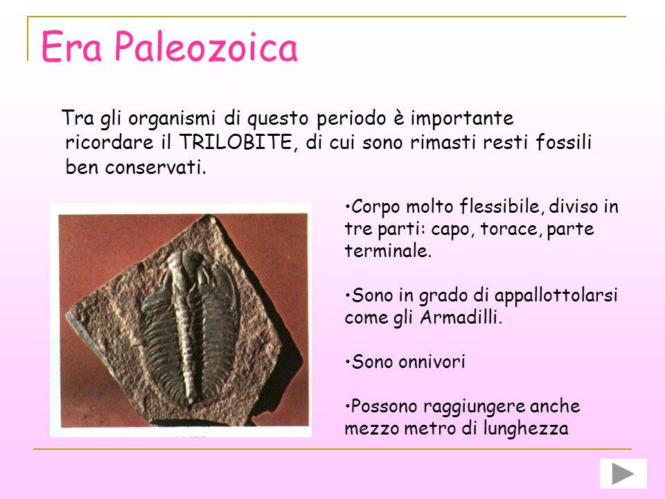Era Paleozoica Tra gli organismi di questo periodo è importante ricordare il TRILOBITE, di cui sono rimasti resti fossili ben conservati.