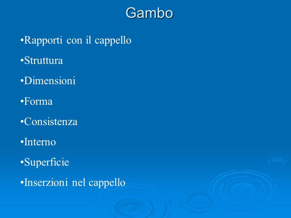 Gambo Rapporti con il cappello Struttura Dimensioni Forma Consistenza