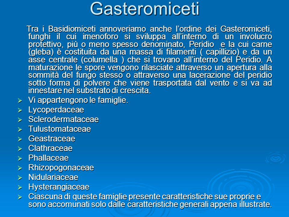 Gasteromiceti