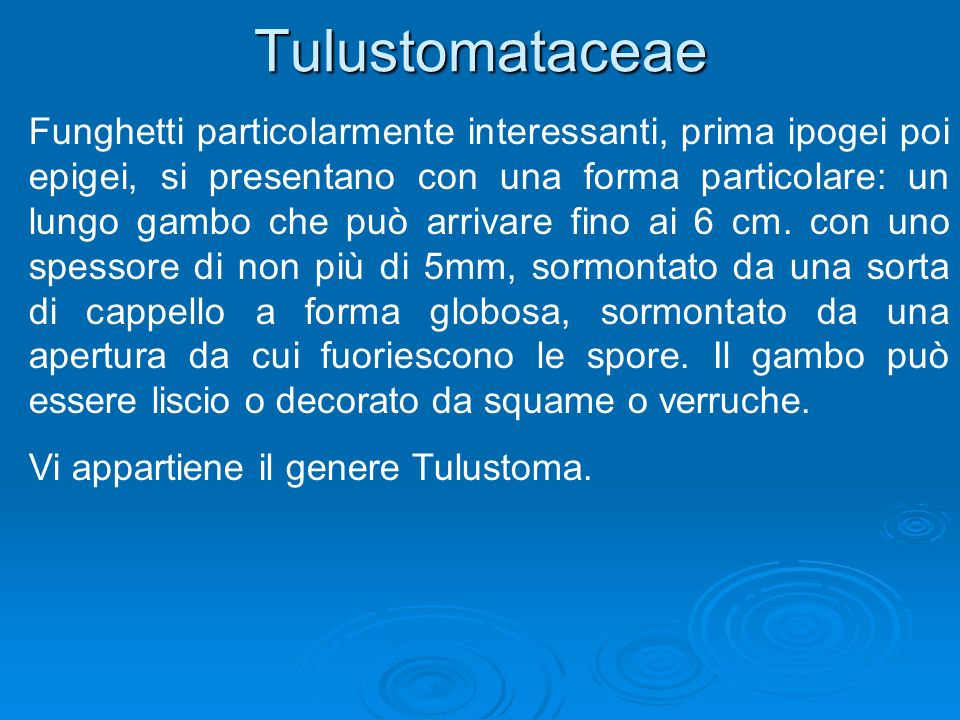 Tulustomataceae