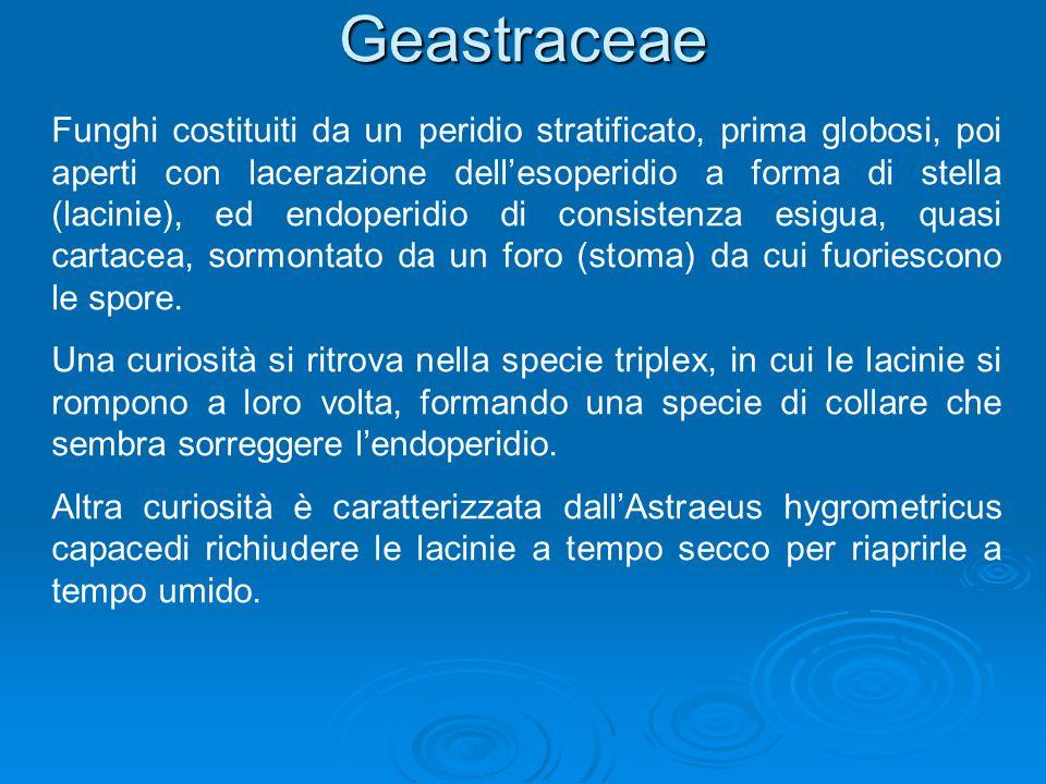 Geastraceae
