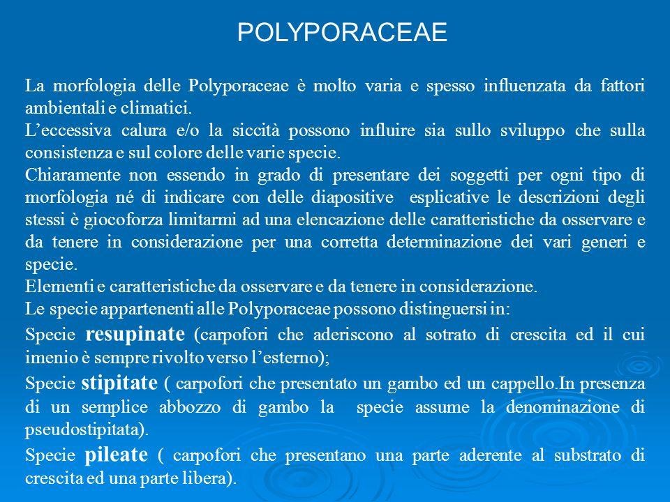 POLYPORACEAE La morfologia delle Polyporaceae è molto varia e spesso influenzata da fattori ambientali e climatici.