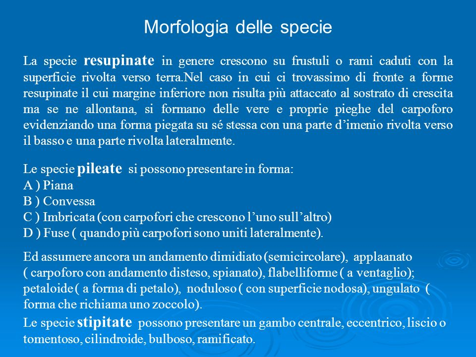 Morfologia delle specie