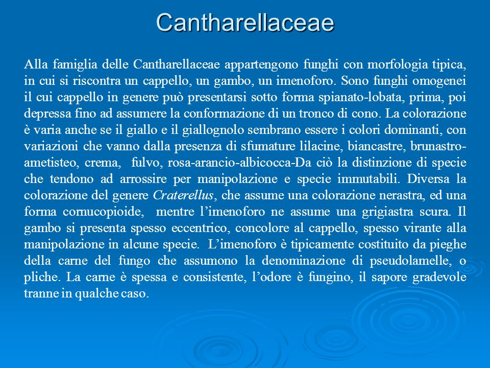 Cantharellaceae