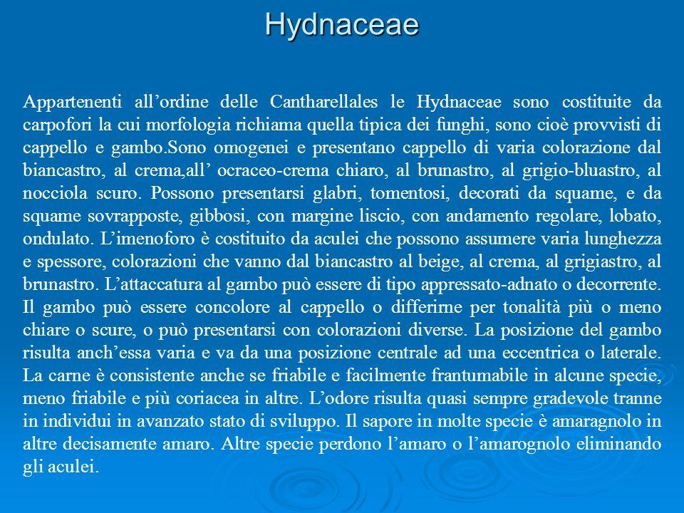 Hydnaceae