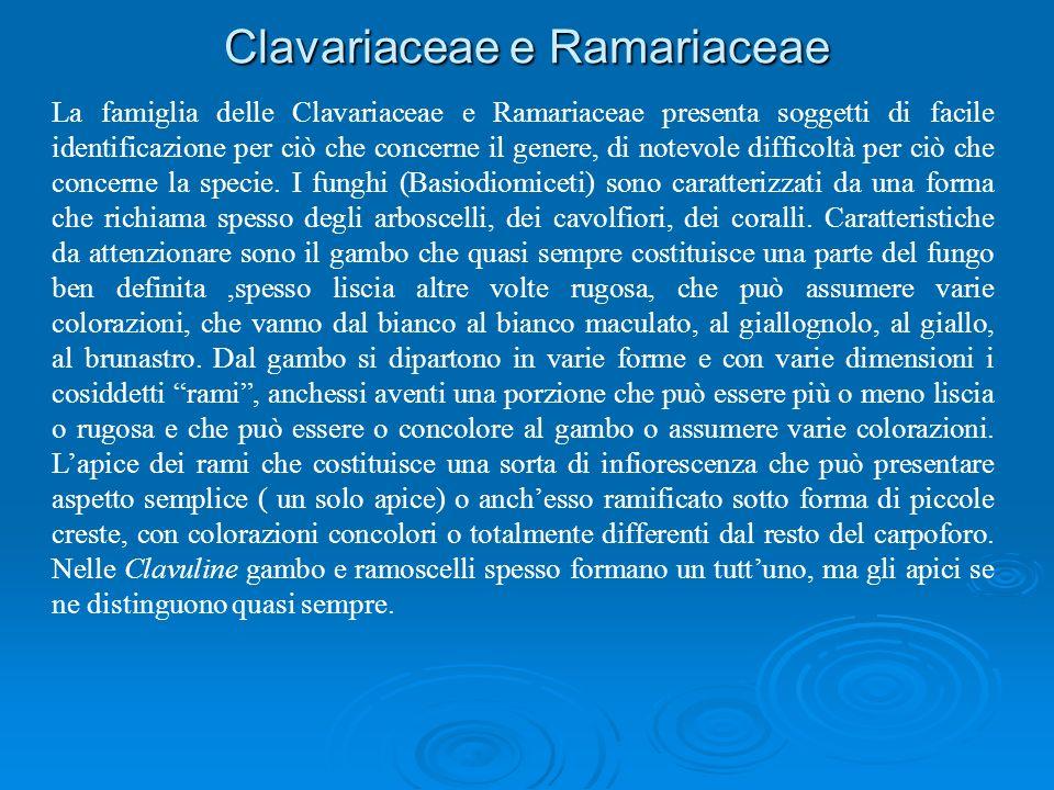 Clavariaceae e Ramariaceae