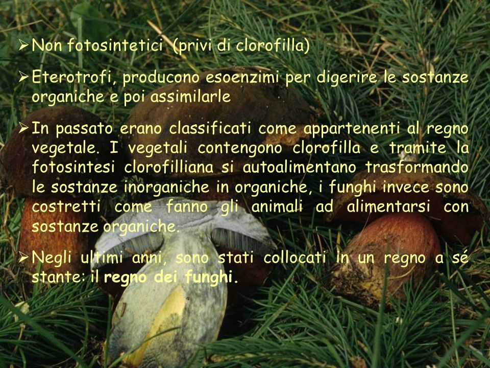 Non fotosintetici (privi di clorofilla)