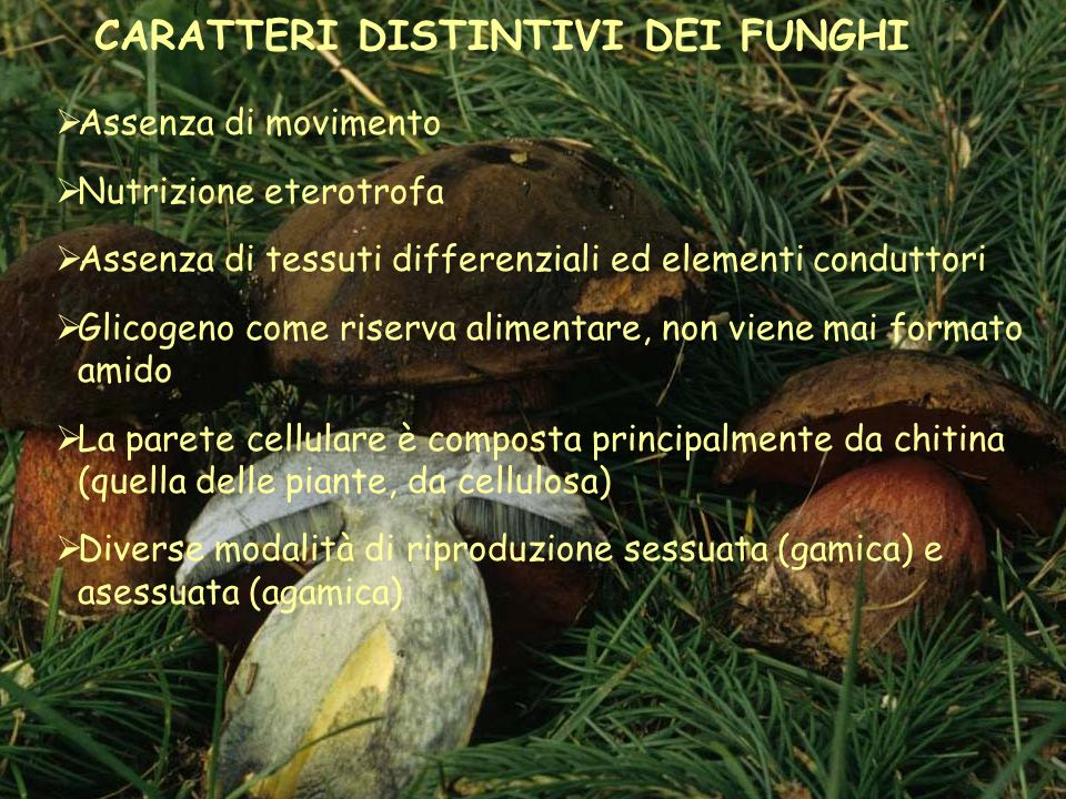 CARATTERI DISTINTIVI DEI FUNGHI