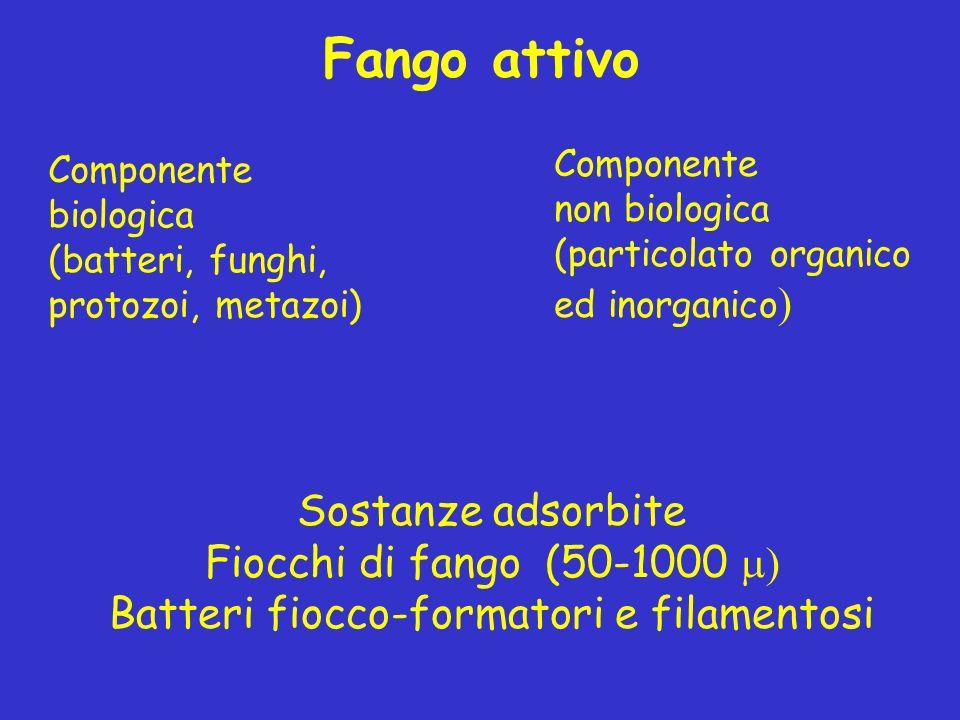 Batteri fiocco-formatori e filamentosi