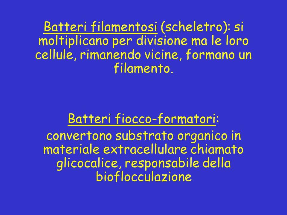 Batteri fiocco-formatori: