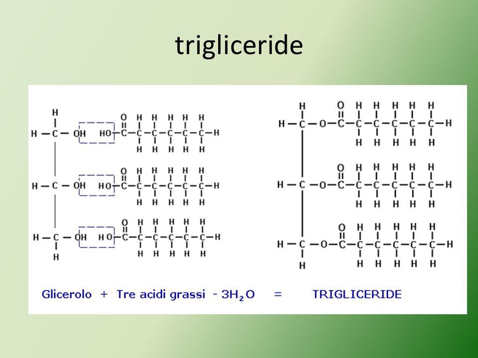 trigliceride