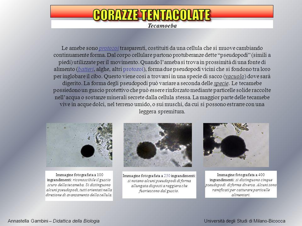 CORAZZE TENTACOLATE Tecamoeba