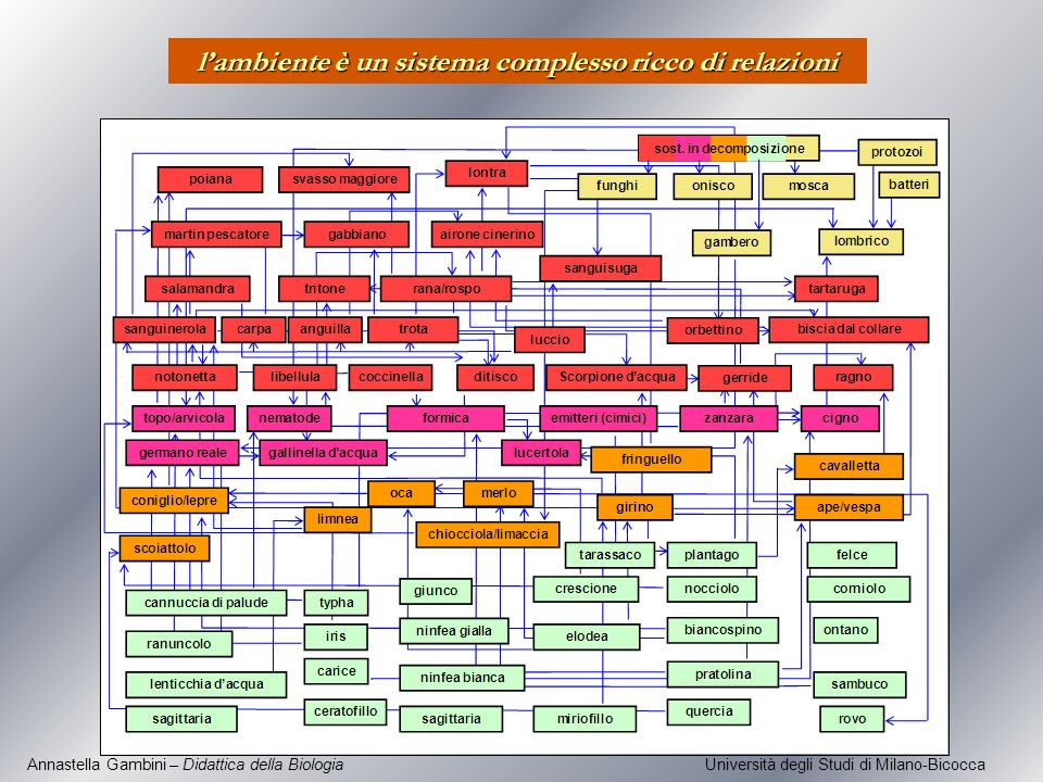 l'ambiente è un sistema complesso ricco di relazioni