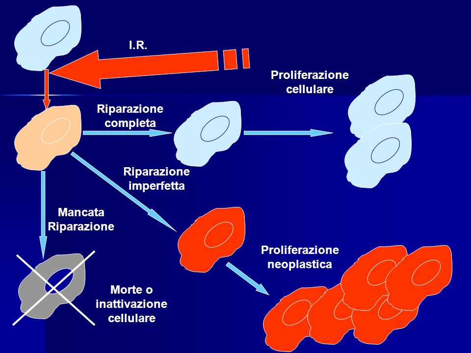Proliferazione cellulare