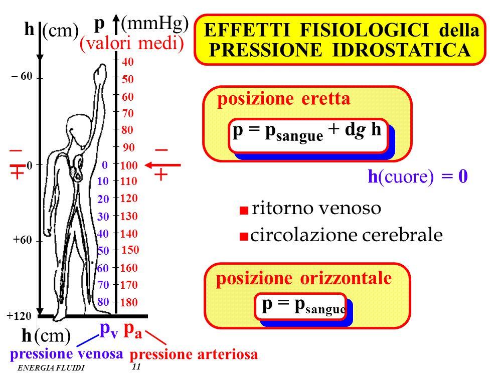 – – + + p (mmHg) h (cm) EFFETTI FISIOLOGICI della